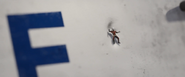 CW Ant-Man 6