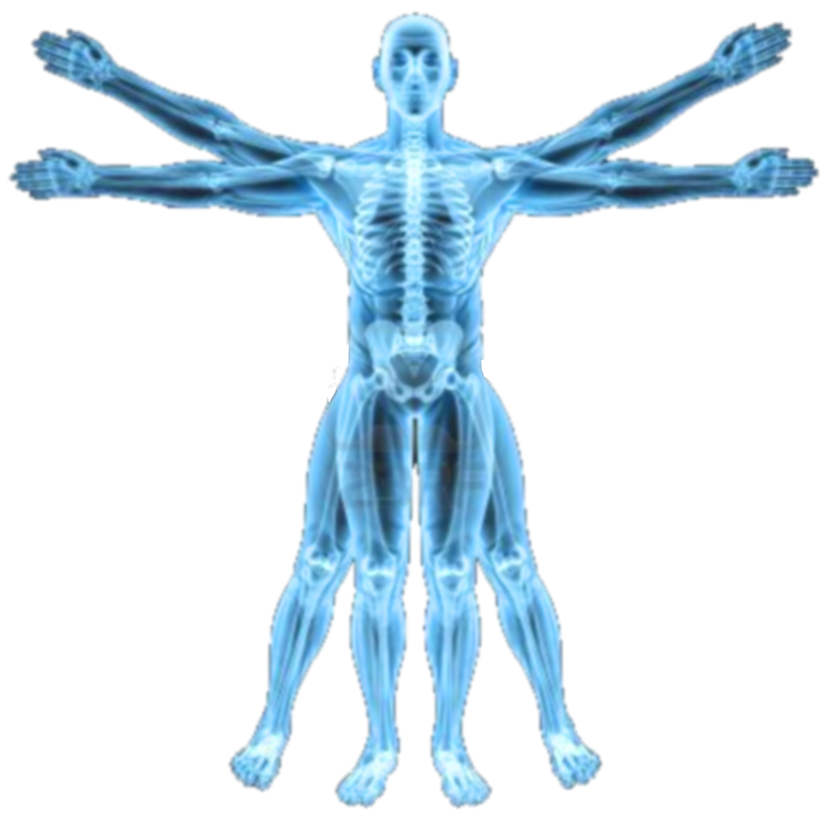 Neutral Blue Image Vitruvian Man X Ray Icon By Slamiticon D62uf3s Png