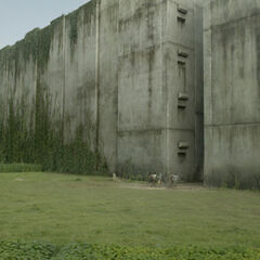 The Glade | The Maze Runner Wiki | Fandom powered by Wikia