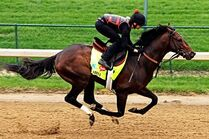 Orb-kentucky-derby-winner-2013