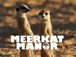 meerkat game