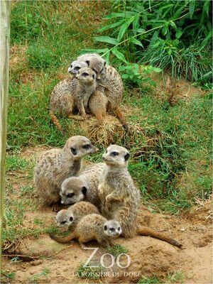 Zoo la boissiere du dore