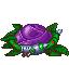 File:PurpleRose.png