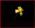 P2IS Iris.png