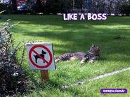 Like-a-boss-1