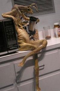 Men In Black Aliens Drinking Coffee Mannix drinking coffee