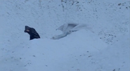 Morgana and Aithusa playing in the snow
