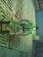 IMG 1989