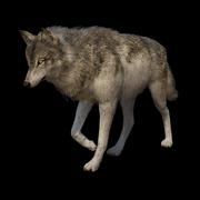 Wolf 32b645f9821d8