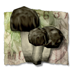 File:Fungus Among Us.png