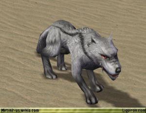 File:Alpha Grey Wolf 1.jpg