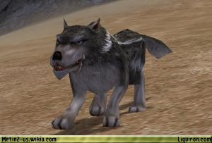 File:Alpha Wolf 4.jpg