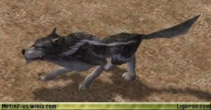 File:Alpha Wolf 3.jpg