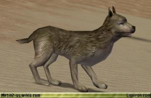 File:Hungry Wild Dog 2.jpg