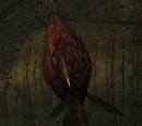 Bloodflower