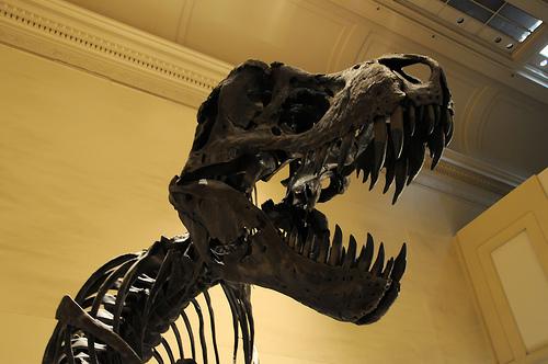 File:The Inevitable Dinosaur Picture.jpg