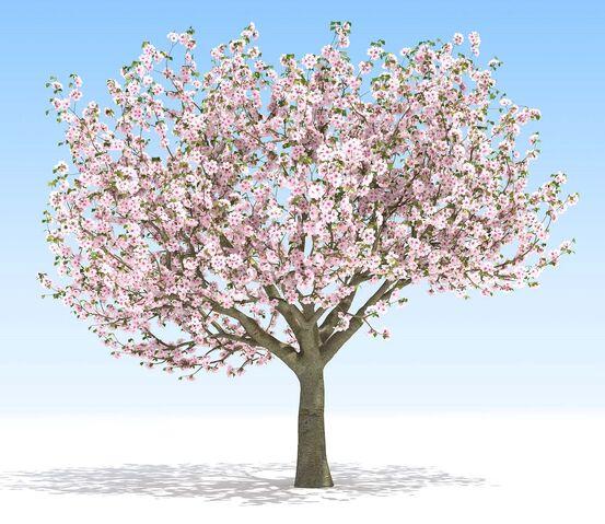 File:National Tree.jpg