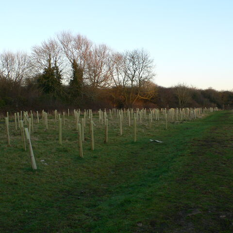 The new trees growing in Pickards Plains.