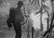Flamethrower in Vietnam