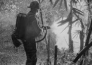 Flamethrower in Vietnam