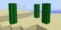 Cactus/Gallery