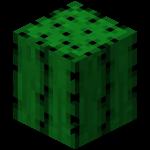 File:Cactus1.png