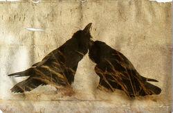 Odins Ravens by Bruce.jpg