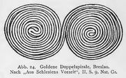 Doppelspiral-Ornamentik, Breslau, RdgA Bd3, Abb.024.jpg