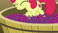 Apple Bloom on a tub of grapes S6E4