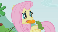 Fluttershy with a carrot in her mouth S1E07