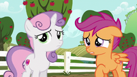 """Scootaloo """"you must have been really upset"""" S6E19"""