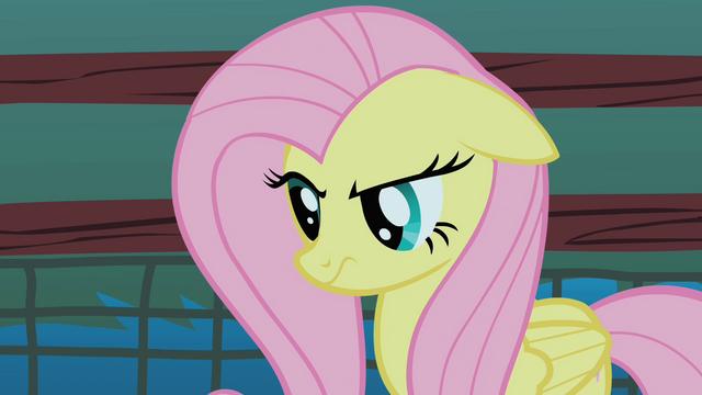 File:Fluttershy stare prelude S1E17.png