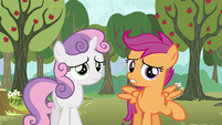 "Scootaloo ""we both sort of got our cutie marks"" S5E4"