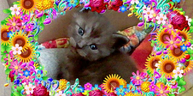 File:Bronyboybro cats 4.jpg