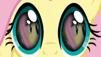 Fluttershy Philomena ashes flashback S3E13