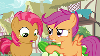 Scootaloo had your chance S3E4