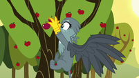 Gabby picking apples at Sweet Apple Acres S6E19