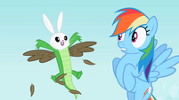 Rainbow Dash sees the bunny, owl and crocodile hybrid S2E07