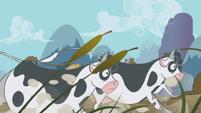 Stampeding cows S1E04