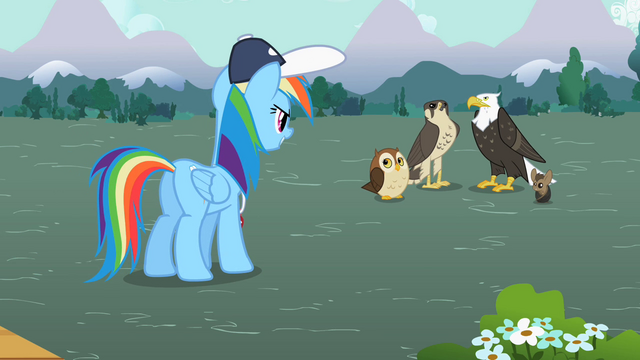 File:Rainbow Dash facing the flyers S2E07.png