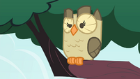 Owlowiscious eyebrow raise S4E23