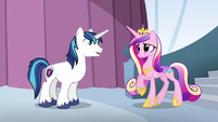 "Shining Armor ""I chose the honor guard"" S6E1"
