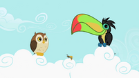 Owl, wasp and toucan S2E07