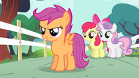 Cutie Mark Crusaders determined S4E05