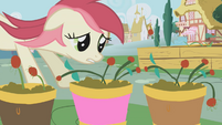 Rose Flower Pots S01E04