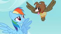 Rainbow Dash sees the owl and dog hybrid S2E07