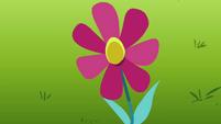 The flower opens S3E05