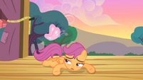 Scootaloo watches butterfly fly S4E05