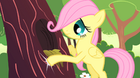 Fluttershy filly knocking on tree trunk S01E23