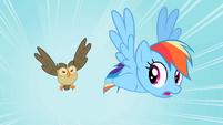 Rainbow Dash Owlowiscious 1 S02E07